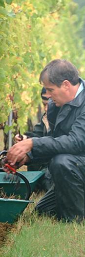 A man harvesting - Un homme collecte - 一个人收集