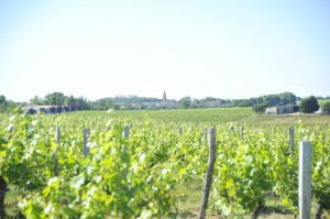 Chateau Suau Vineyards
