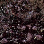 Stages of winemaking