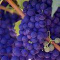 5 choses à savoir sur le vin
