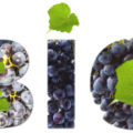 bio - Organic wine market figures and facts