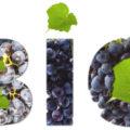 chiffres du vin bio