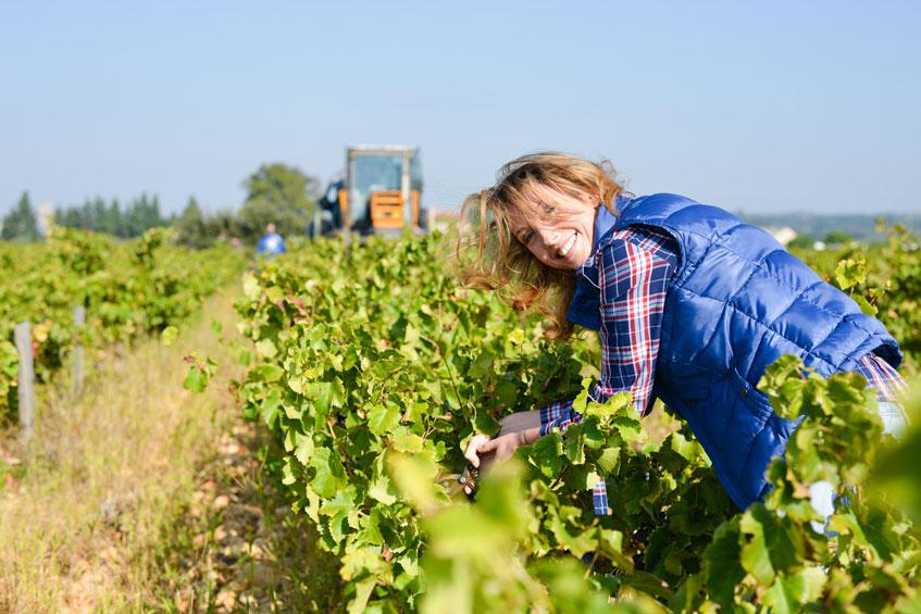 vin bio crée de l'emploi