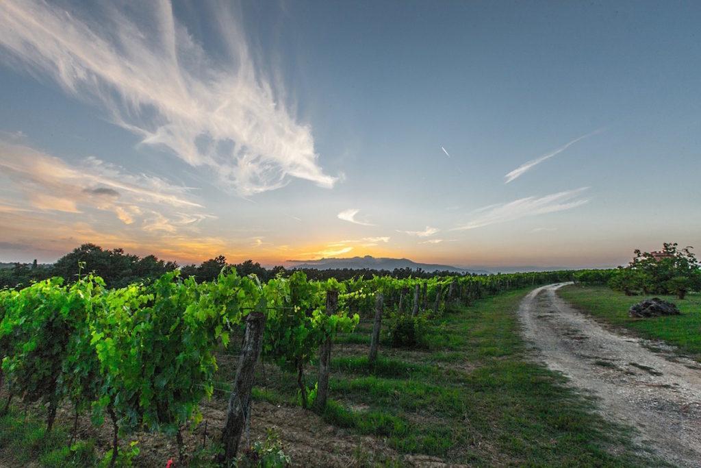 chateau suau route des vins blancs vignobles