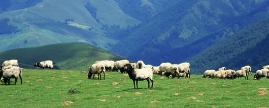 agneau espace